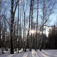 Январь :: Ольга