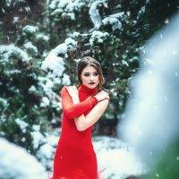 Роза :: Ирина Боярко