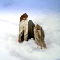 И выросли кристаллы ледяные.. :: Андрей Заломленков
