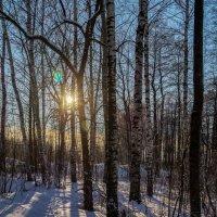 Мороз и Солнце 4 :: Андрей Дворников