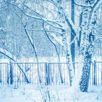 зимняя пора :: Елена Мир