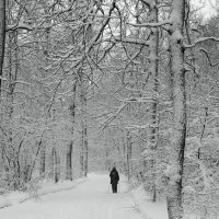Скандинавская ходьба :: София