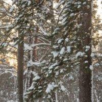 В зимнем лесу :: Oksana