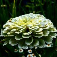 Цветок :: Виктория Черненко