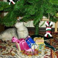 Может и к Старому Новому Году мне припрятали подарочек? :: Надежда