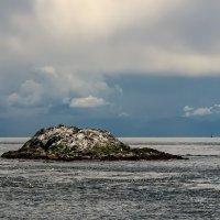 Птичий остров :: Alena Nuke