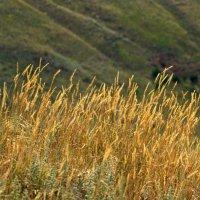 Золотые травы :: MaOla ***