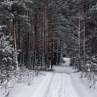 Сбежав от шума городского... :: Лесо-Вед (Баранов)
