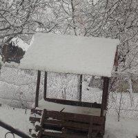 зима :: надя кулинич