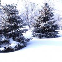 зима :: Анатолий Бугаев