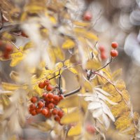 Red Gold :: Сергей Nikon
