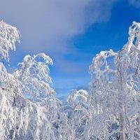 Зимние контрасты.. :: Светлана Игнатьева