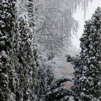 Зимнее одиночество :: Константин Строев