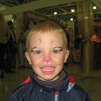 На котовыставке был и такой котенок... :: Владимир Безбородов