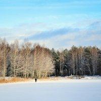 Одинокий лыжник на Рождественской лыжне :: Милешкин Владимир Алексеевич