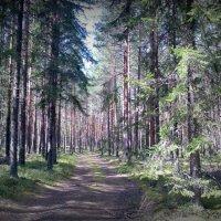 Лесные и ягодные прогулки :: Натали Пам