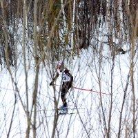 Лыжница :: Андрей Кузнецов