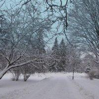 Зима в парке :: Татьяна
