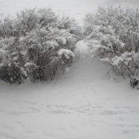 Ночью выпал снег... :: BoxerMak Mak