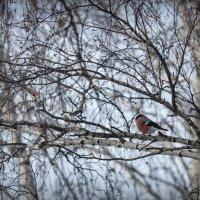 Зима за окном :: Ольга Фролова