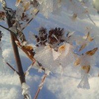 ледяные бабочки :: Татьяна