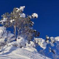 На белом-белом покрывале января. :: Сергей Адигамов