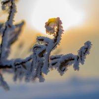 Зимняя травинка :: Константин Батищев