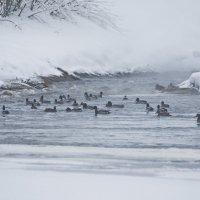 На зимовке! (1) :: Андрей Синицын