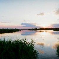 Стайка уток в лучах июньского заката :: Михаил