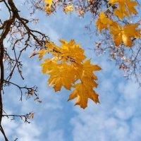 Осень :: Иваннович *