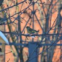 птички-невелички :: Светлана Ларионова