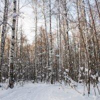 Лес волшебно красивый :: Екатерина Краева