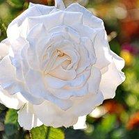 Роза :: Liudmila Antonova