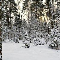 Январь :: Милешкин Владимир Алексеевич
