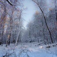 Зимушка-зима... :: Владимир Безбородов