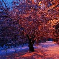День и ночь :: Аl Anis
