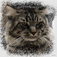 Мейкун2-из серии Кошки очарование мое! :: Shmual Hava Retro