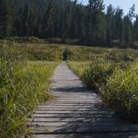 дорога в лес :: sayany0567@bk.ru