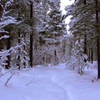 В белый снег весь лес одет... :: Галина Полина