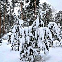 """Мороз снежком укутывал: """"Смотри, не замерзай!"""" :: Михаил Столяров"""