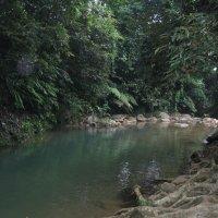 Ко Чанг. Горная речка в джунглях. :: Лариса (Phinikia) Двойникова