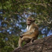 Милашка из Полоннарувва. Cutie from Polonnaruwa :: Юрий Воронов