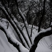 Дерева, вы мои дререва... :: Людмила Синицына