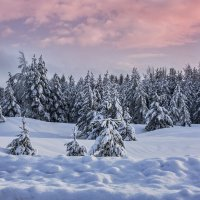 в лесу :: Ирина Смирнова