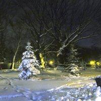 Снежные елочки :: Александр Сальтевский