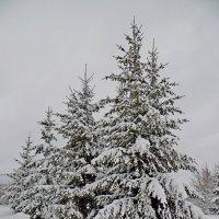 Вечер в Полоцке! :: Андрей Буховецкий