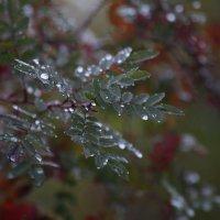 Соприкосновение с дождем. :: юрий