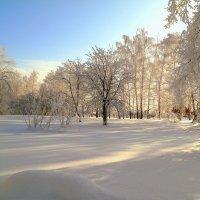 Все краски января.. :: Андрей Заломленков