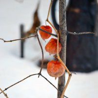 Зимний этюд :: Nina Streapan