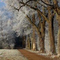 Дорожка в зиму. :: Юрий. Шмаков